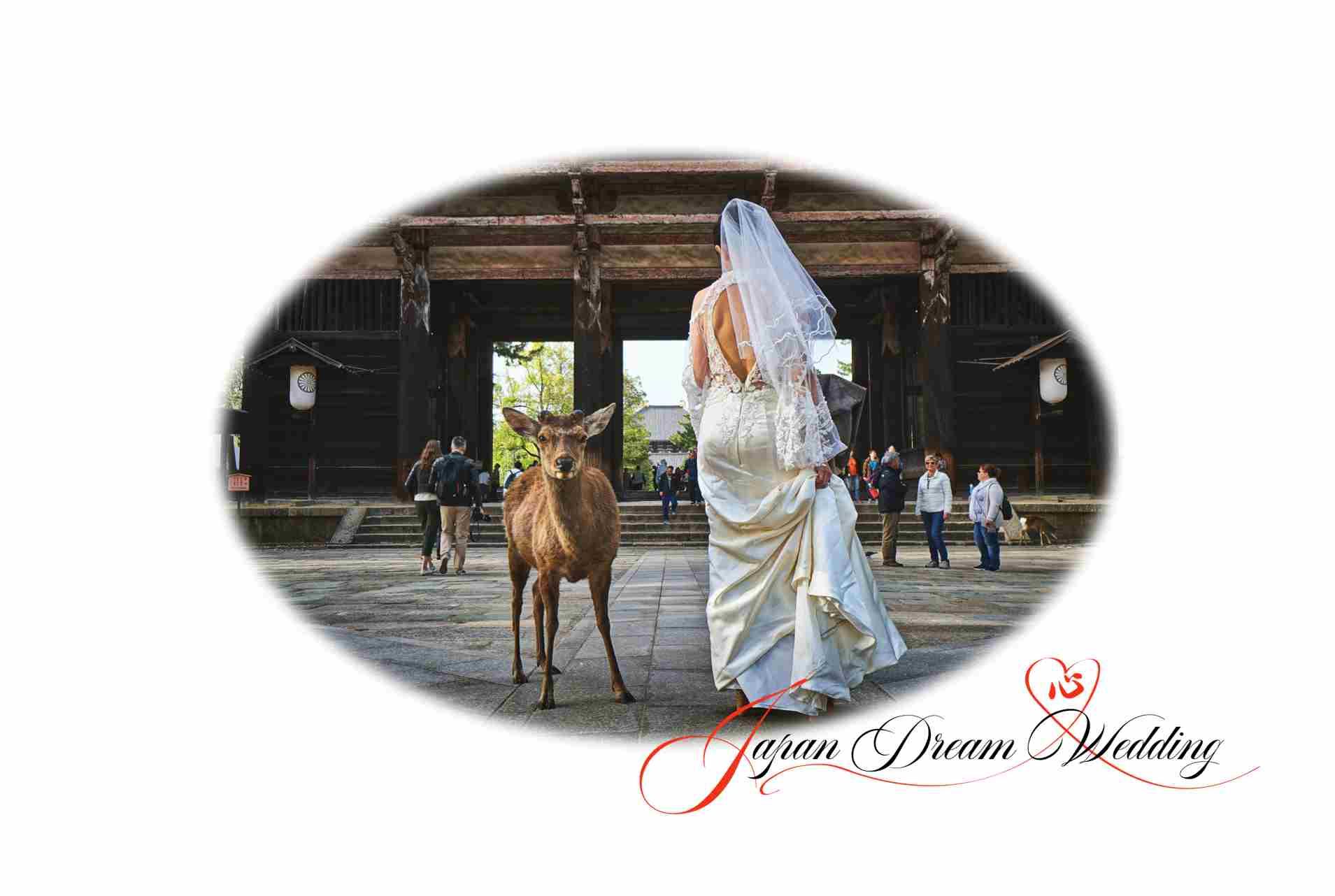 Japan Dream Wedding - Wedding Party Travel